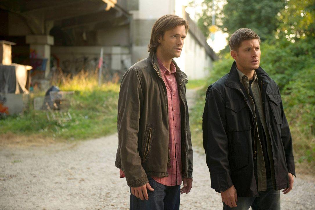 Sam (Jared Padalecki, l.) und Dean (Jensen Ackles, r.) recherchieren nach Castiels Aufenthaltsort. Keine einfache Aufgabe ... - Bildquelle: 2013 Warner Brothers