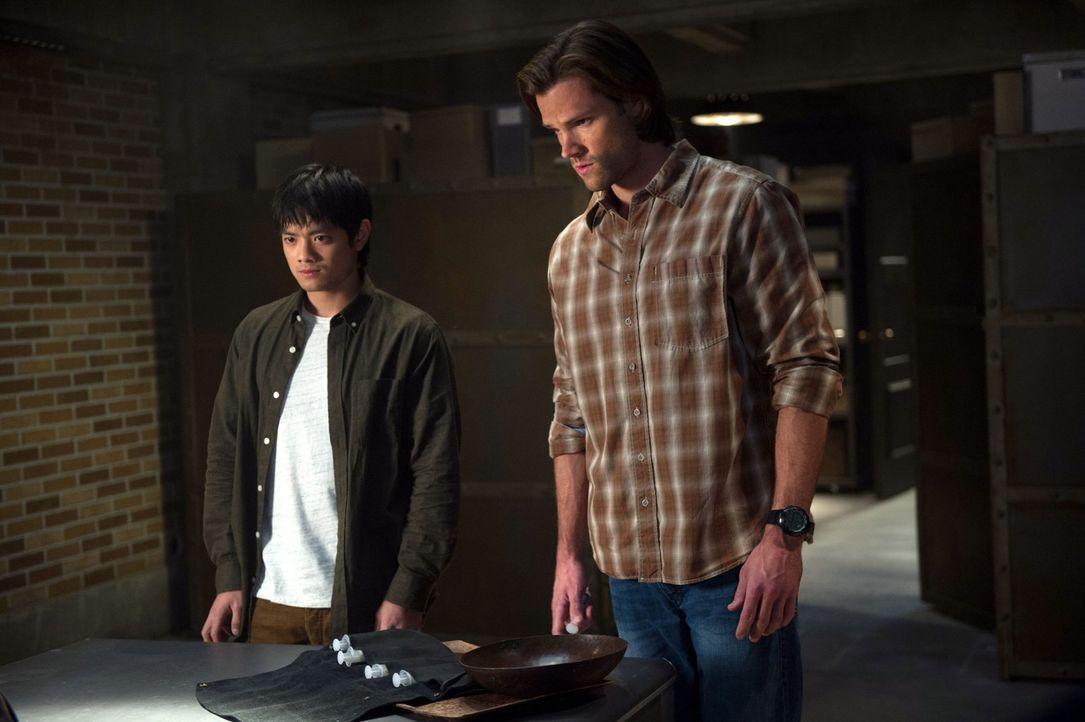 Während Dean sich auf den Weg zu Castiel macht, müssen Kevin (Osric Chau, l.) und Sam (Jared Padalecki, r.) in den Büchern nach ausgestorbenen Sprac... - Bildquelle: 2013 Warner Brothers