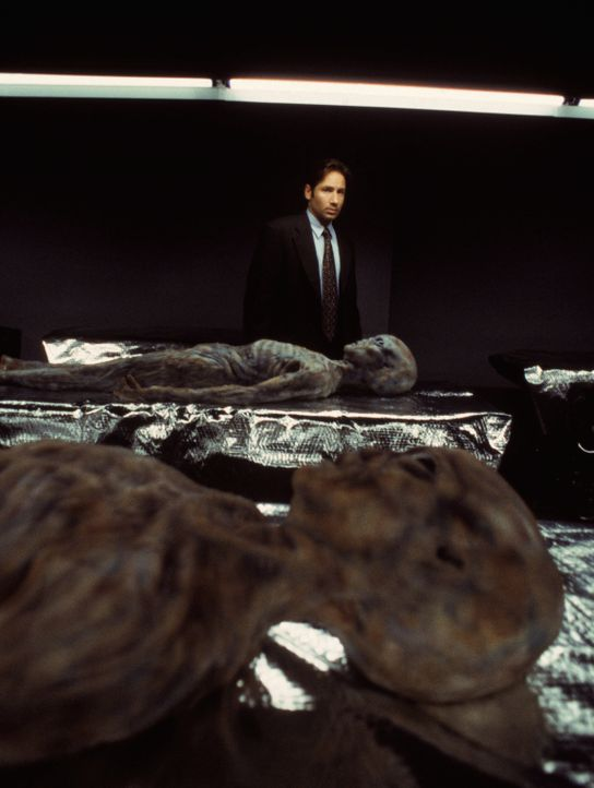 Fox Mulder (David Duchovny) - Bildquelle: 1998 Twentieth Century Fox Film Corporation.  All rights reserved.