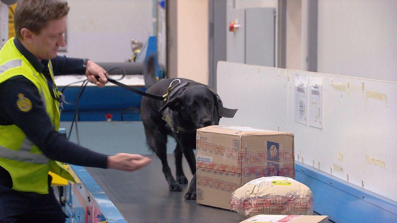 Die Sicherheitsbeamten im Postzentrum trauen ihren Augen nicht, als sie ein ... - Bildquelle: 2019 Seven Network (Operations) Limited
