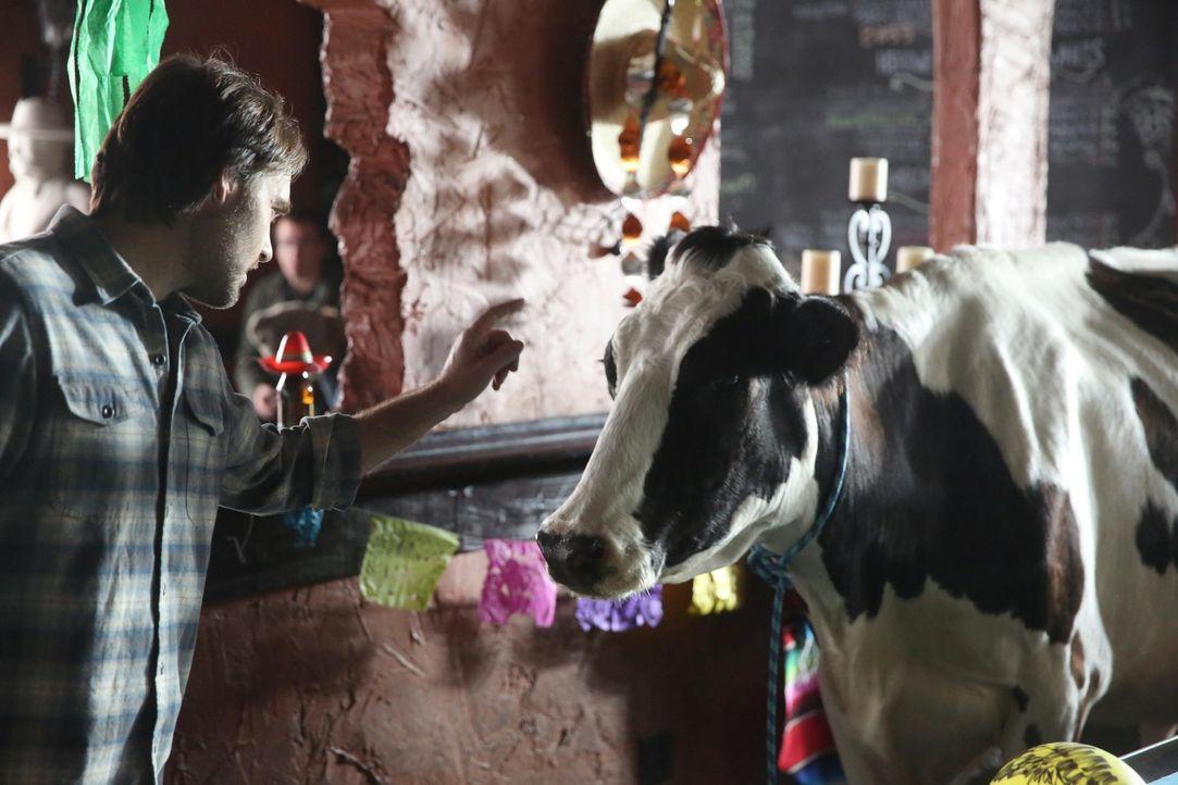 Als eine Kuh plötzlich in der Nachbarschaft auftaucht, will Phil (Will Forte) diese nutzen, um seinen Stand in der Gruppe zu verbessern ... - Bildquelle: 2015 Fox and its related entities.  All rights reserved.