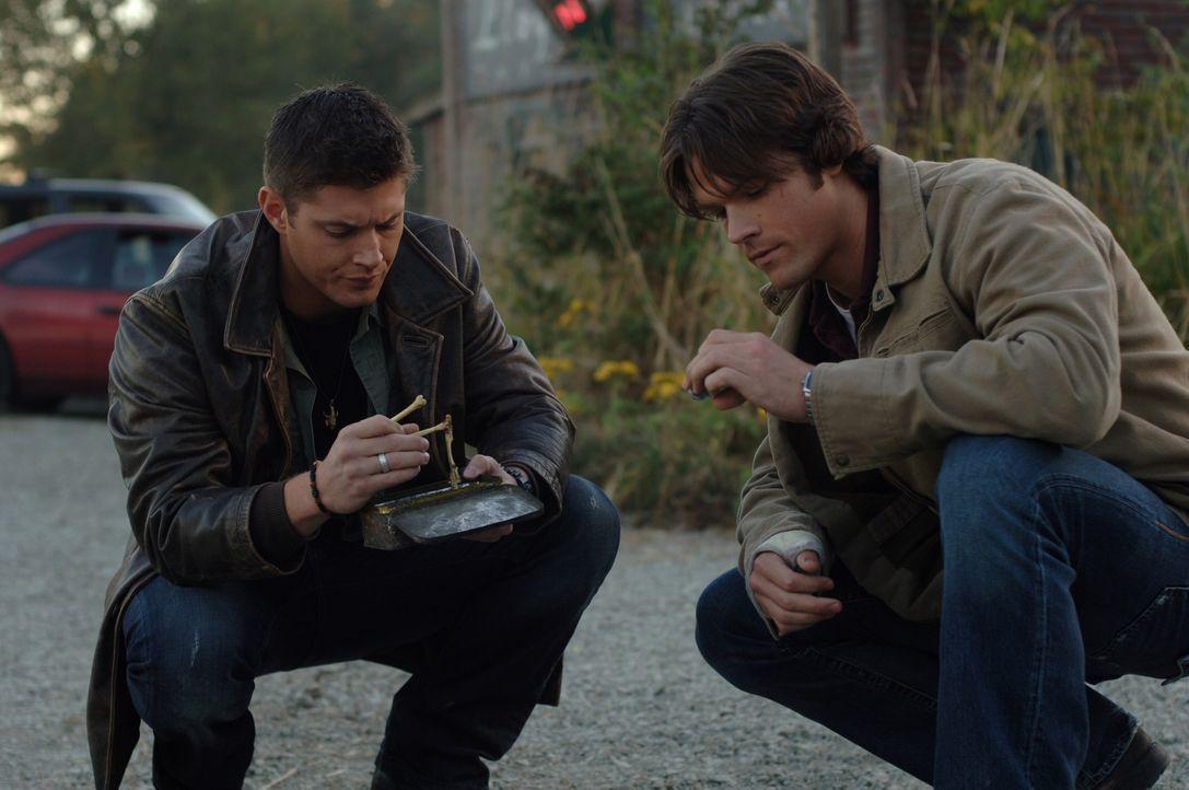 Merkwürdiger Fund: In einer Box entdecken Sam (Jared Padalecki, r.) und Dean (Jensen Ackles, l.) Knochen einer Katze und ein Foto ... - Bildquelle: Warner Bros. Television