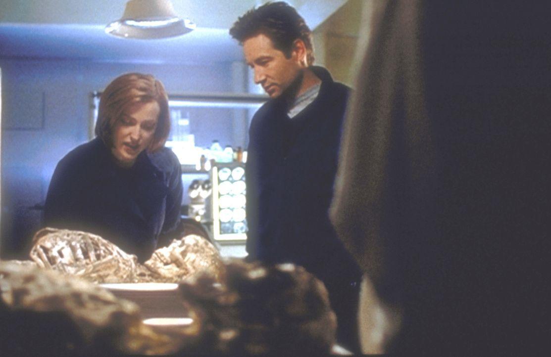 Mulder (David Duchovny, M.) und Scully (Gillian Anderson, l.) begutachten die Skelette zweier Wanderer, die eigentlich noch gar nicht verwest sein d... - Bildquelle: TM +   2000 Twentieth Century Fox Film Corporation. All Rights Reserved.