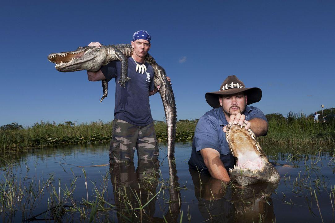 (1. Staffel) - Die Gator Boys Paul Bedard (l.) und Jimmy Riffle (r.) haben einen ganz besonderen Job. Sie kümmern sich um Krokodile die sich an unge... - Bildquelle: Bob Croslin 2011 Discovery Communications