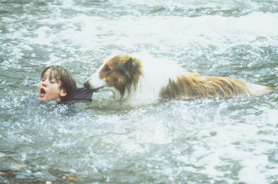 Selbstlos kümmert sich Lassie um ihr Herrchen Matt (Tom Guiry, l.). Eines Tages stürzt sie sich sogar in die Fluten, um Matt aus einem reißenden Flu... - Bildquelle: Paramount Pictures
