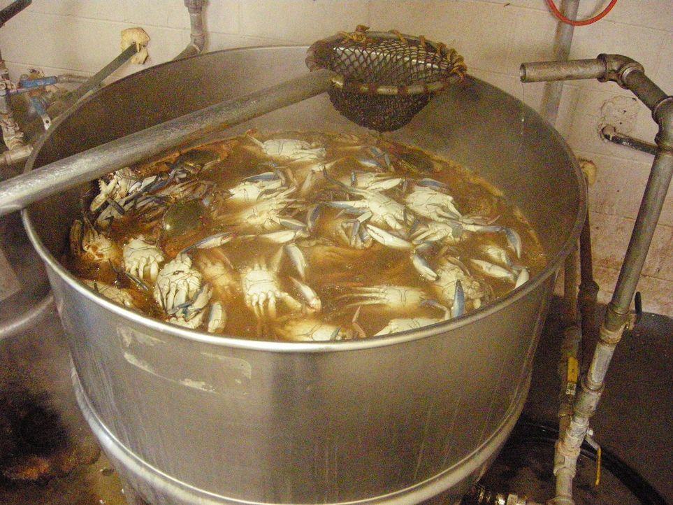 Ob Krebs, Muscheln, Garnelen, Fisch oder Seetang - in dieser Folge dreht sich alles um Köstlichkeiten aus dem Meer ... - Bildquelle: The Travel Channel, L.L.C.