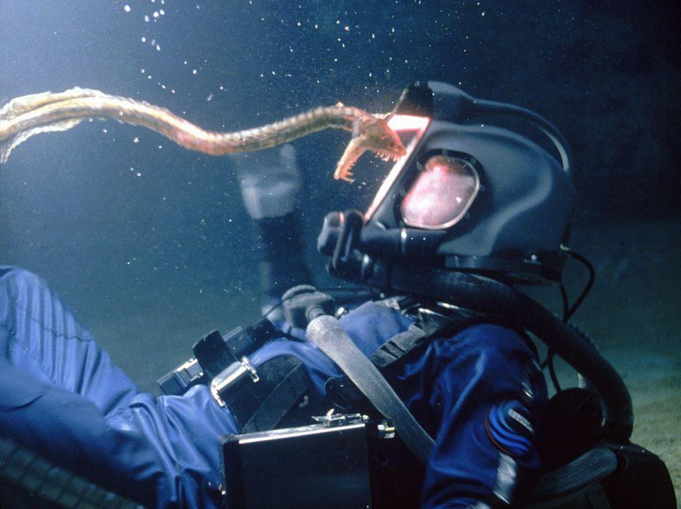 Seeschlangen sind nicht die einzige Gefahr, die Dr. Norman Goodman (Dustin Hoffman) und die anderen Crew-Mitglieder tief unter der Meeresoberfläche... - Bildquelle: Warner Bros. Pictures