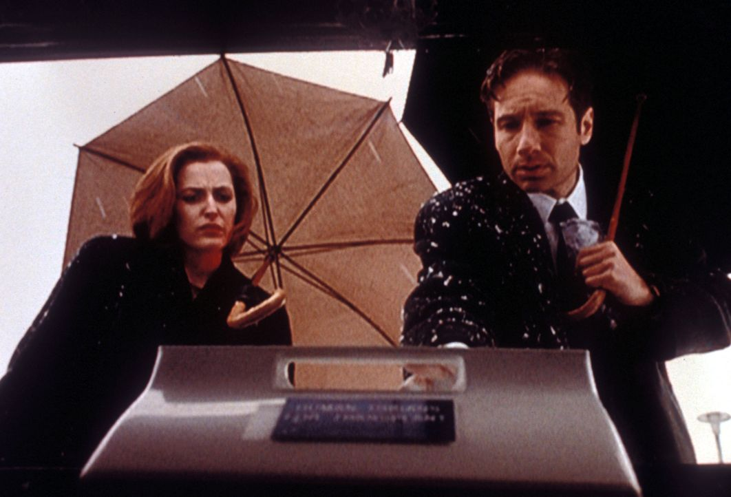 Scully (Gillian Anderson, l.) und Mulder (David Duchovny, r.) arbeiten fieberhaft an der Aufklärung mehrerer Mordfälle. - Bildquelle: TM +   2000 Twentieth Century Fox Film Corporation. All Rights Reserved.