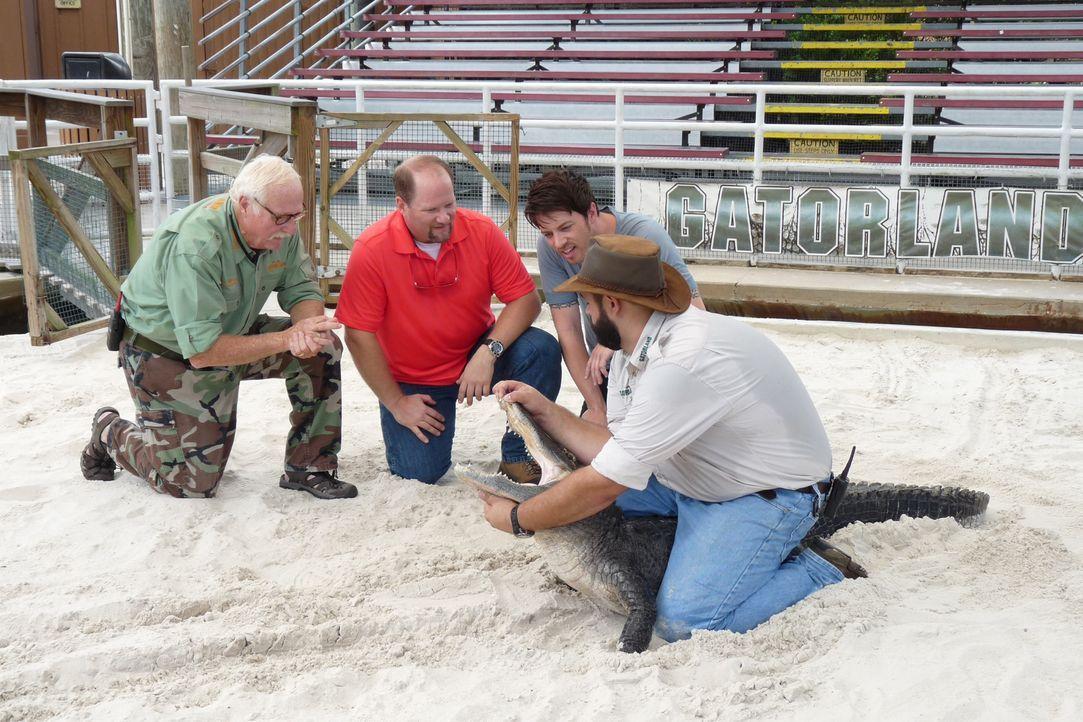 Gemeinsam mit Freizeitpark-Fan Charles (2.v.l.) testet J.D. Scott (2.v.r.) den Reptilien-Tierpark Gatorland in Florida und kommt dort den aggressive... - Bildquelle: 2014,Great American Country/Scripps Networks, LLC. All Rights Reserved.