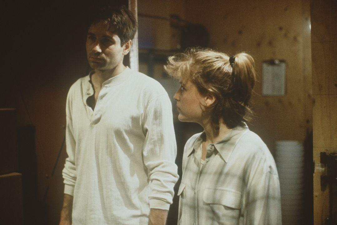 Mulder (David Duchovny, l.) und Scully (Gillian Anderson, r.) erfahren, dass sie zum Nordpol müssen, um herauszufinden, was mit einem Team von Wisse... - Bildquelle: TM +   2000 Twentieth Century Fox Film Corporation. All Rights Reserved.