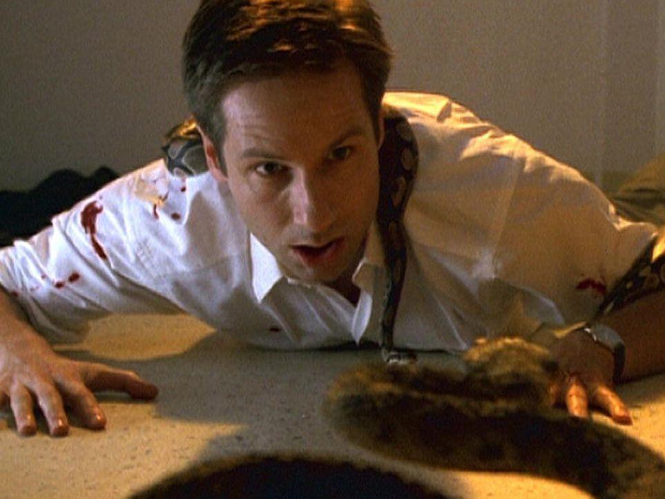 Mulder (David Duchovny) gerät in eine äußerst brenzlige Situation ... - Bildquelle: TM +   2000 Twentieth Century Fox Film Corporation. All Rights Reserved.