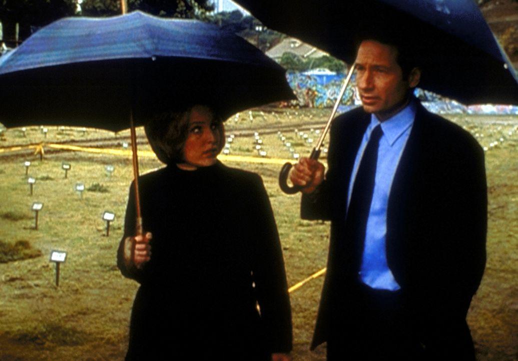 Mulder (David Duchovny, r.) und Scully (Gillian Anderson, l.) untersuchen einen Mord, der sich als Selbstmord entpuppt. - Bildquelle: TM +   2000 Twentieth Century Fox Film Corporation. All Rights Reserved.